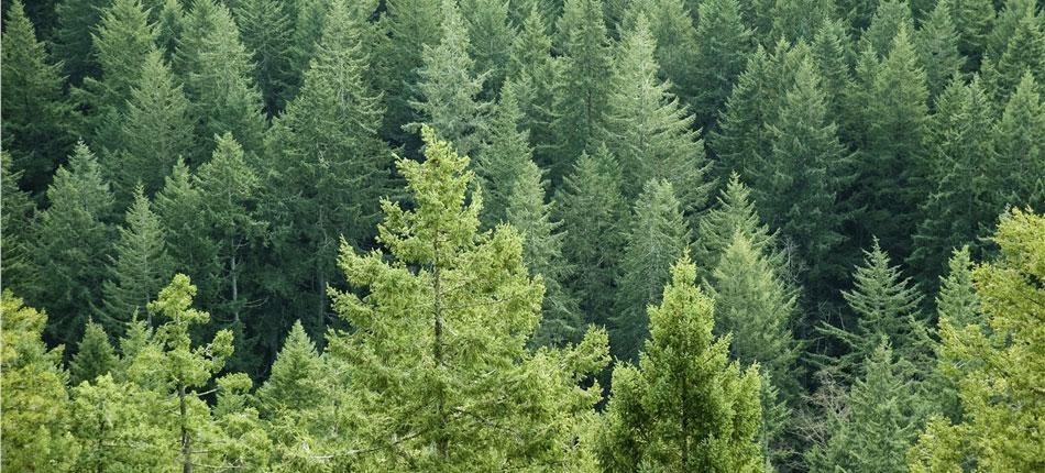 SeeingForest